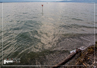 Rolling waves of the Lake Constance or Bodensee in southern Germany